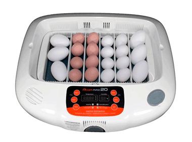 incubadora huevos aves