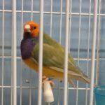 Pastel Verde Clasico Cabeza Naranja